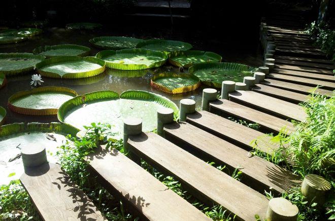 Le Jardin Botanique de Pamplemousse.