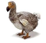 Le Dodo
