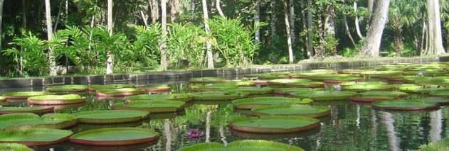 jardin-botanique-pamplemousses-maurice
