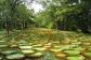 Jardin Des Pamplemousse